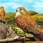 Birds of Prey Slide